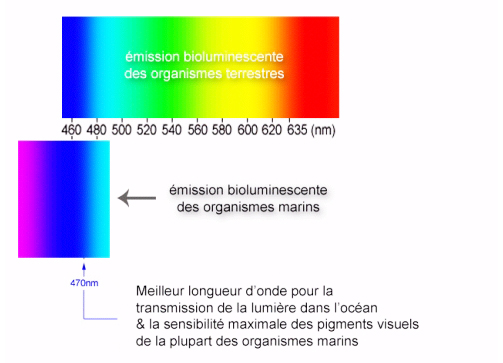 émission de la bioluminescence